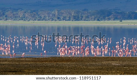 Millions of flamingos on lake in the Crater Ngorongoro - Tanzania, Eastern Africa - stock photo