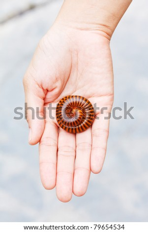 Millipede on women hand - stock photo