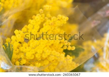 Mimosa bouquet in Campo De Fiori famous street market - stock photo