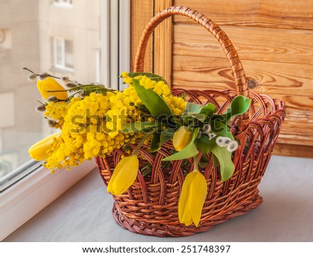 Mimosa, willow twigs and tulips in a basket on a window - stock photo