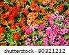 mini flower vintage style in garden - stock photo