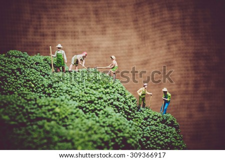 Miniature farmers harvesting broccoli. Color tone tuned macro photo - stock photo