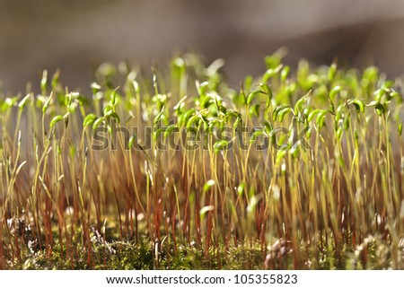 Miniature moss forest, on a close up shot - stock photo