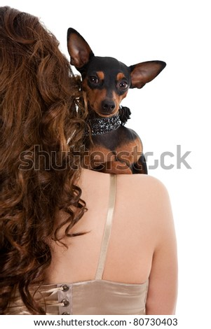 miniature puncher on woman's shoulder, isolated on white background - stock photo