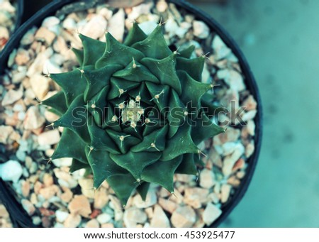 Miniature succulent plants.View from the top.  - vintage effect style. - stock photo