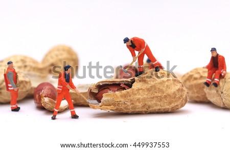 Miniature worker are working open peanut on white background , macro photo - stock photo