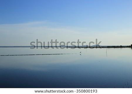 minimal bird - stock photo
