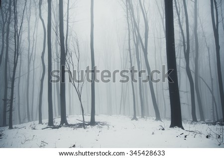 minimal winter forest landscape - stock photo