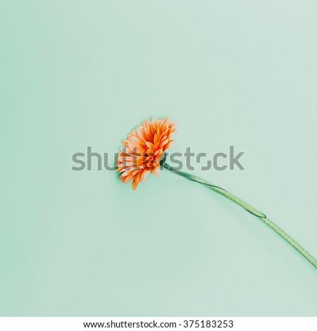 Minimalism fashion. Flowers on  blue background - stock photo