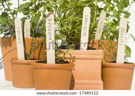 Mint, chives, lavender, rosemary, basil and thyme fresh herbs in terracotta pots - stock photo