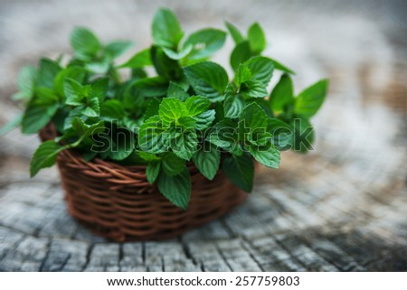 Mint  in small basket on natural wooden background, peppermint, selective focus, close up - stock photo