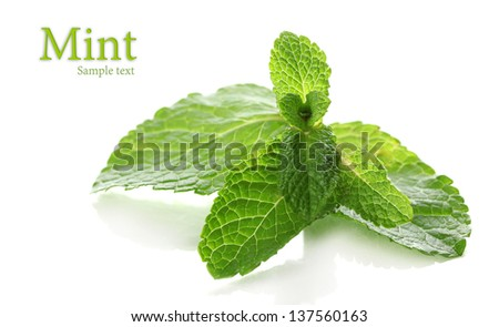 Mint isolated on white - stock photo