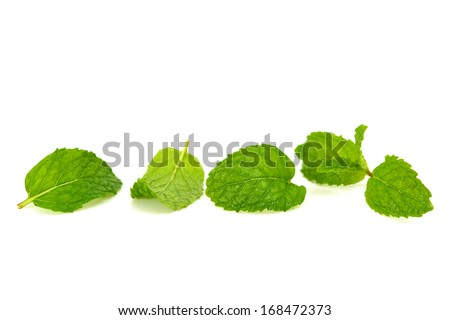 mint leaf isolated on white - stock photo