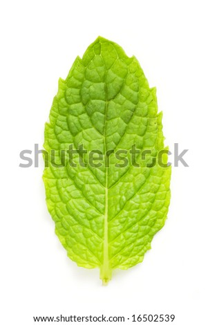 mint leaf macro isolated against white background - stock photo