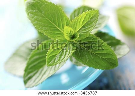 mint leafs - stock photo