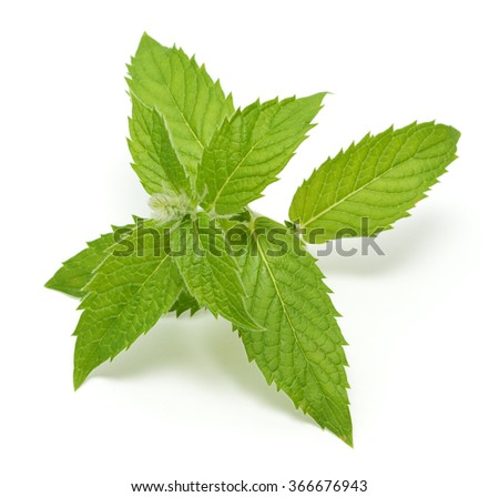 Mint leaves isolated on a white background - stock photo