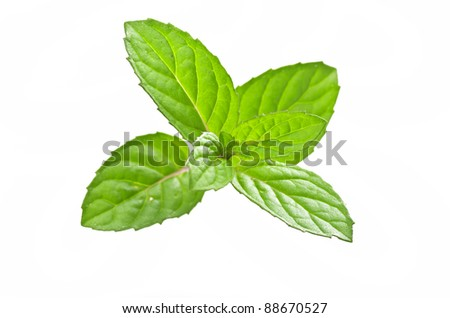 mint leaves on the white - stock photo