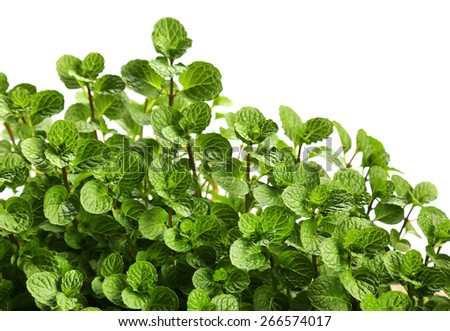 Mint leaves over white background - stock photo