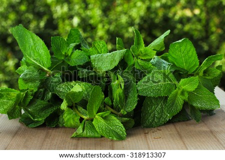 mint on the table on a background of trees - stock photo