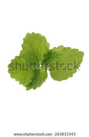 mint on  white background - stock photo