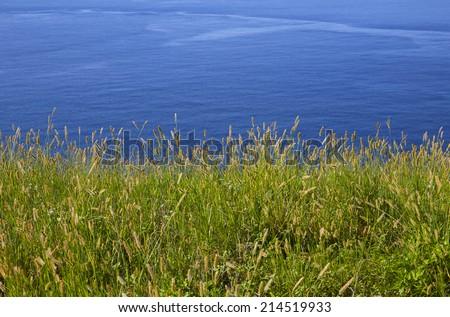 miscanthus&sea - stock photo
