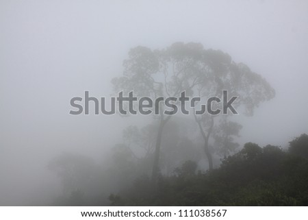 Mist covered forest - stock photo