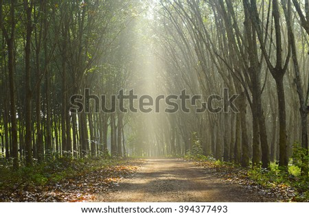 Mist impact sunlight in the morning on the road between para rubber garden. - stock photo