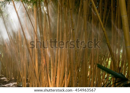 mist morning in a bamboo forest and sunlight beams - stock photo
