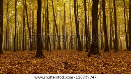 Misty autumn forest. - stock photo