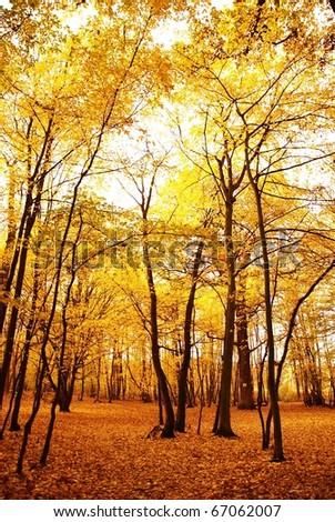 Misty autumn forest - stock photo