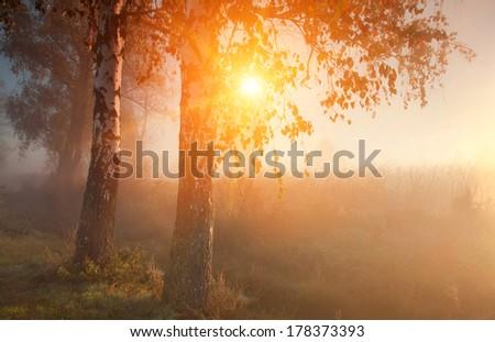 Misty autumn forest at sunrise - stock photo