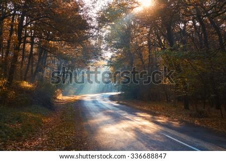Misty autumn forest road - stock photo
