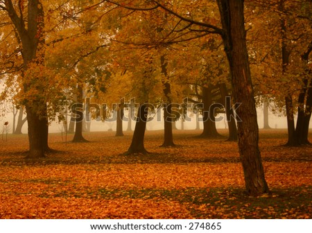 Misty Autumn Morning 2 - stock photo