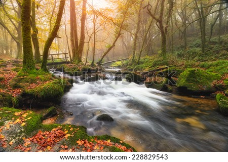 Misty Autumn morning at Golitha Falls where the River Fowey flows through woodland on the edge of Bodmin Moor in Cornwall - stock photo