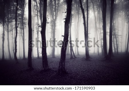 misty forest at night - stock photo