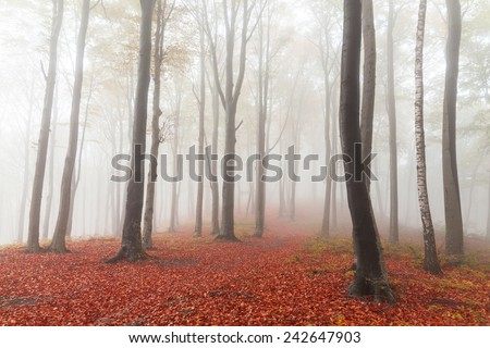 Misty forest during autumn - stock photo