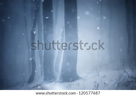 misty forest in winter - stock photo