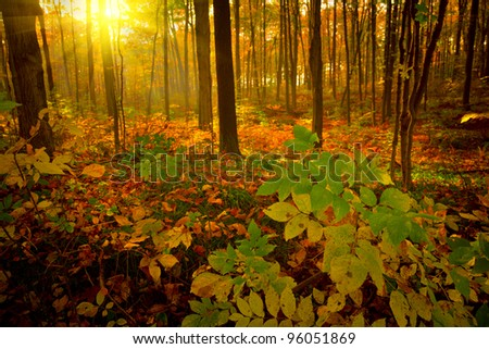 Misty forest on a early autumn morning - stock photo