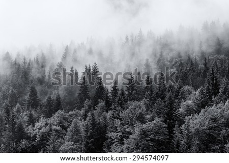 Misty forests of evergreen coniferous trees in an ethereal landscape with low laying mist or cloud clinging to the tops of the trees - stock photo