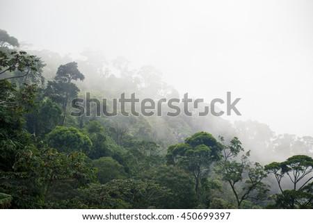 misty jungle forest near Rio at Brazil - stock photo