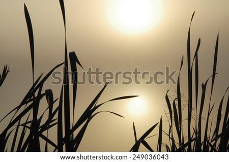 Misty Lake. Landscape with a cane - stock photo
