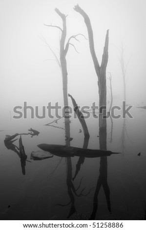 Misty lake with dead trees in black and white - stock photo
