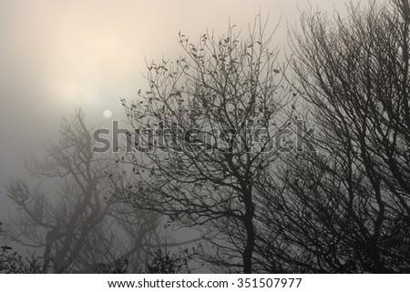 misty landscape with trees, sky and sun, foggy photo with gloomy feeling - stock photo