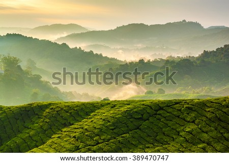 Misty morning at Cameron Highlands tea plantation 1 - stock photo