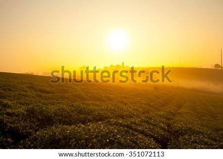 misty morning in green tea hill on Moc Chau Highland - stock photo