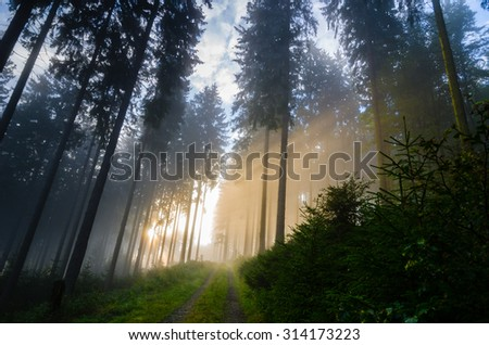 Misty morning in the forest. Sunbeams and mist in a forest. A forest track leads into the background. Image taken near the town of Bad Berleburg, Germany. Wide agle lens. - stock photo