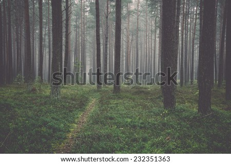 Misty morning in the woods. Vintage effect. - stock photo