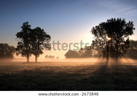 Misty morning on the meadow - stock photo
