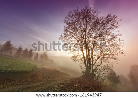 Misty morning scene with lonely tree - stock photo
