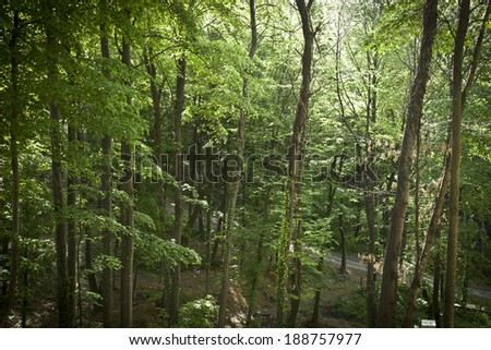 Misty Old Forest - stock photo